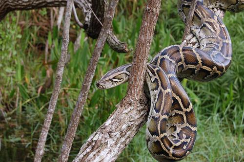 夢占い ヘビ 蛇 猫