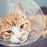 猫に噛まれる・猫が怪我してる夢について