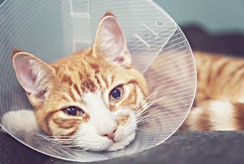 夢占い 猫 噛みつく 怪我