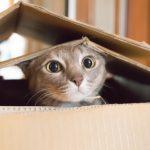 猫を飼う夢と猫がしゃべる夢について