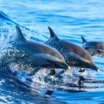 海の生き物の魚・イルカ・サメの夢占い