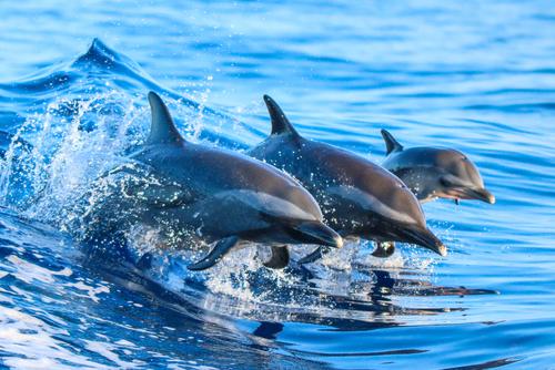 夢占い 海 魚 イルカ サメ 泳ぐ