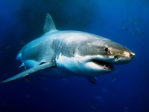 夢占い 海 魚 イルカ サメ 食べる