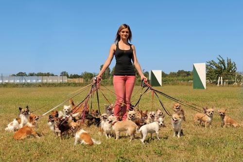 夢占い 犬 たくさん 出産 助ける
