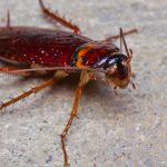 嫌われ虫No.1のゴキブリを捕まえる夢と逃げる夢占いの意味