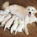 子犬が授乳する夢占いの意味は?