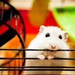 ハムスター・ウサギ、動物を飼う夢占いについて