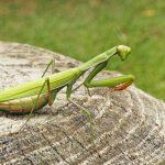 緑色の服・虫と鳥の印象的な夢占いについて