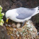 鳥が卵を産む夢占いについて