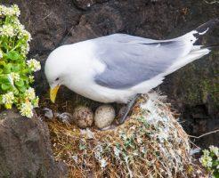 夢占い 鳥 卵 産む