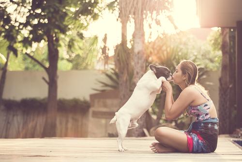 夢占い しゃべる 動物 猫 犬