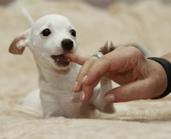 夢占い 噛まれる 痛い 足 犬