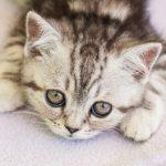 子猫がミルクを飲む夢占いについて