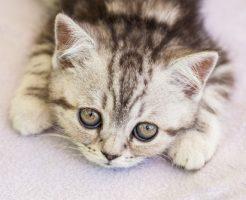 夢占い ミルク 猫 子猫 飲む