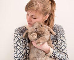 夢占い 茶色 ウサギ 子猫 ネズミ フクロウ