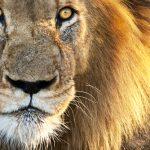 ライオン・黒猫を撫でる夢占いの意味は?