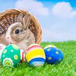 ウサギ・猫・ネズミ・動物のフンの夢占いについて