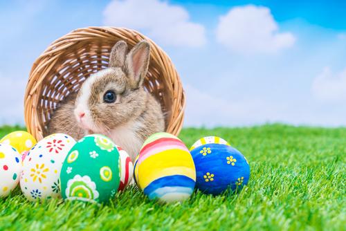 夢占い ふん ウサギ 猫 ねずみ 動物