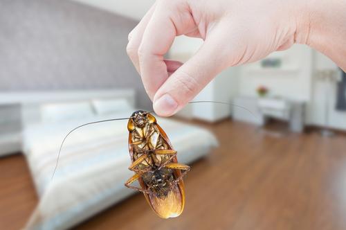 夢占い ゴキブリ 大量