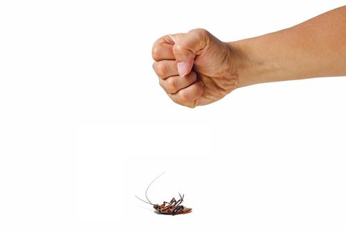 夢占い ゴキブリ 踏む 捕まえる 動かない 潰す