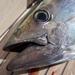 魚に噛まれたり、魚を食べる夢占いの意味は?