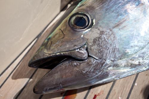夢占い 捕まえる 魚 鳥