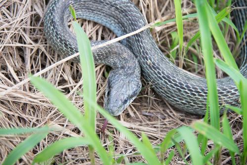 夢占い 捕まえる 虫 蛇