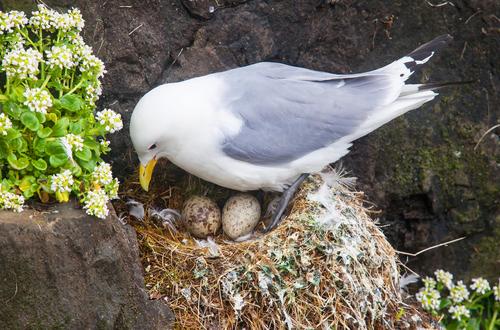 夢占い 卵 虫 鳥
