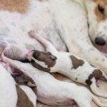 動物が出産する夢占いについて