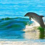 イルカがジャンプする夢や海やプールにイルカが出てくる夢占いについて