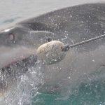 サメを釣ったり、飼ったり、助ける夢占いについて