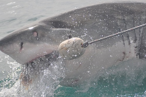 夢占い サメ  釣る 飼う 助ける