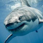 サメと戦う夢とサメに噛まれる夢占いについて