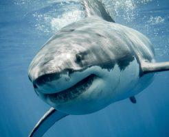 夢占い サメ戦う 噛まれる
