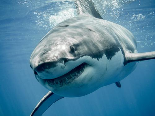夢占い サメ 戦う 噛まれる