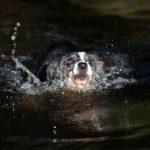 犬や子どもやペットが溺れる夢占いについて