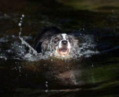 夢占い 溺れる 犬 子ども ペット