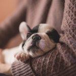 子犬を助けたり、子犬が懐いてくる夢占いについて