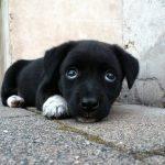 子犬の色が白だったり黒だったりする場合の夢占いについて