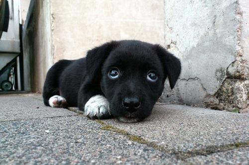 夢占い 子犬 白 黒