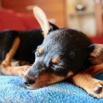 子犬が産まれたり、子犬を抱っこする夢占いについて