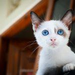 怪我してる子猫の夢占いの意味とは?