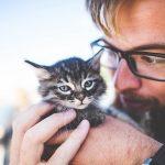 子猫が喋る夢占いの意味とは?