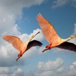 鳥のつがいの夢占いの意味とは?