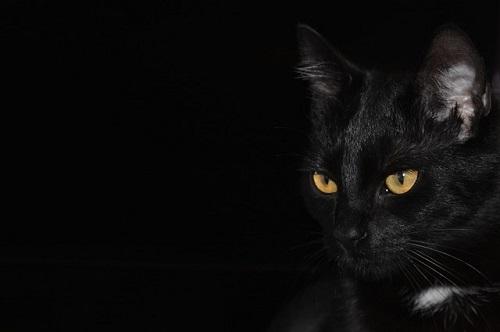 夢占い 黒猫 子 猫 たくさん