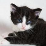 黒猫を追い払ったり黒猫に噛まれたりする二つの夢占いの意味とは?
