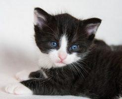 夢占い 黒猫 追い払う 噛まれる