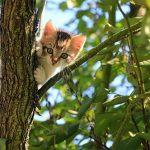 子猫を拾う夢占いの意味とは?