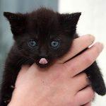 黒猫が懐いてきたり、黒猫を飼う二つの夢占いの意味とは?