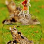 金魚が水槽で跳ねる夢占いの意味とは?